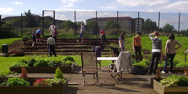 Volunteers planting a community growing scheme